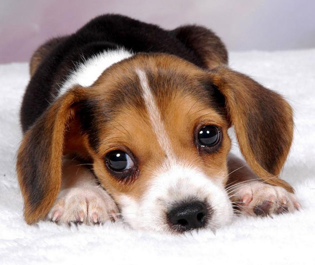 1000+ ideas about Cute Puppy Gif on Pinterest | Baby puppies, Dogs
