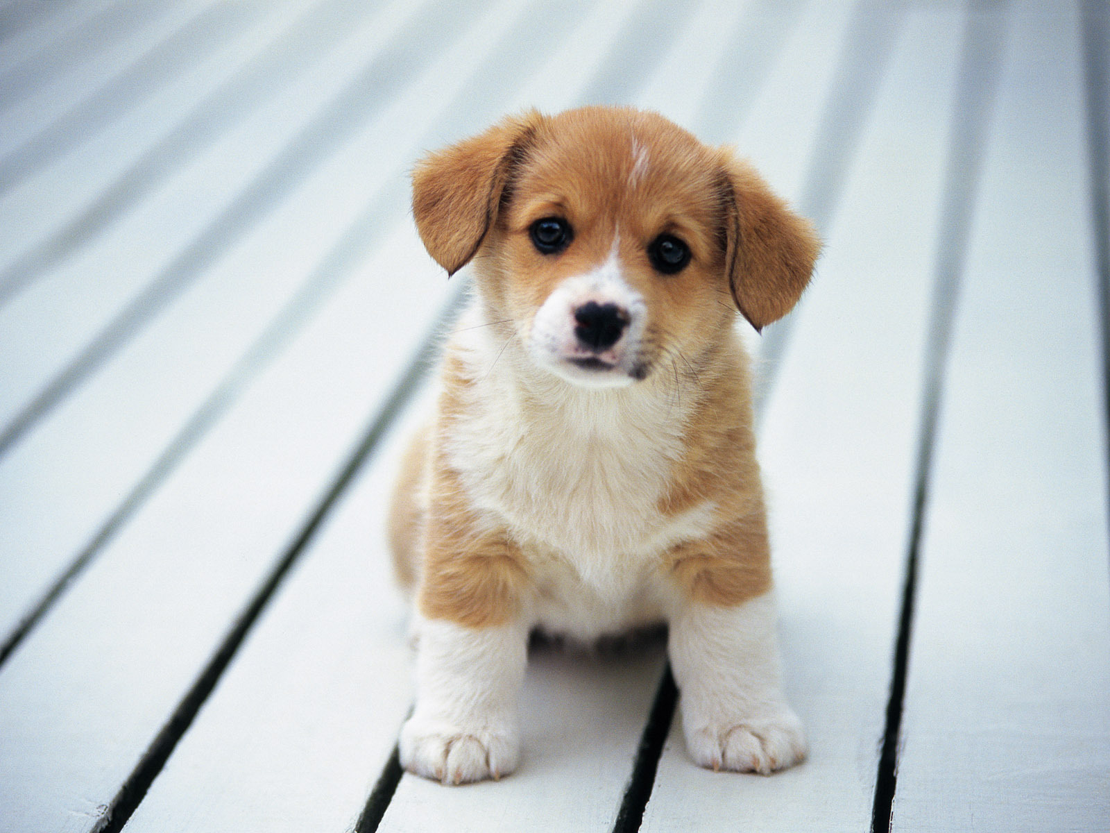 Cute Puppy So Puppies Fanpop Widescreen With Pictures Of Full Hd