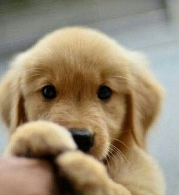 Cute Puppy Images Sf Wallpaper