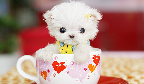50 Cute Puppies Make Your Girlfriend Smile - Cutest Paw