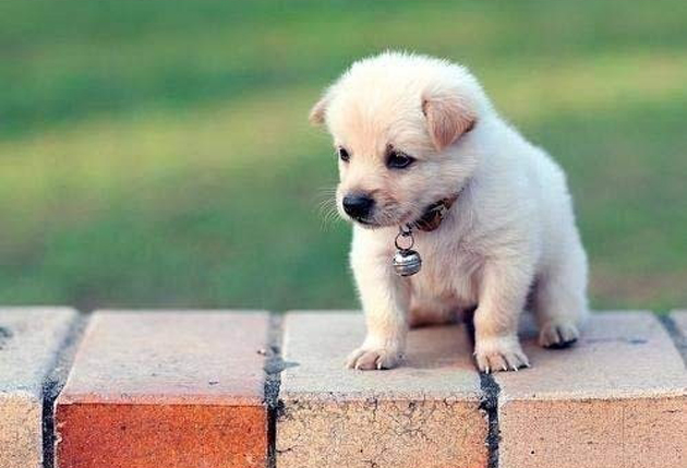 75 Cute Puppy Dog Photos | Great Inspire