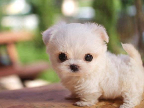 1000+ ideas about Cute Puppies on Pinterest | Baby puppies