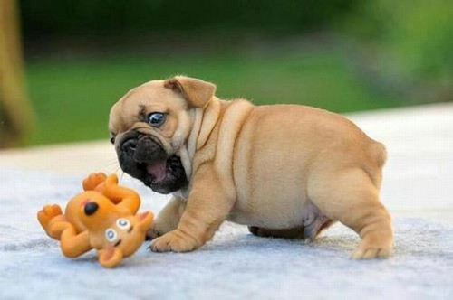 25 Cutest Puppies Ever