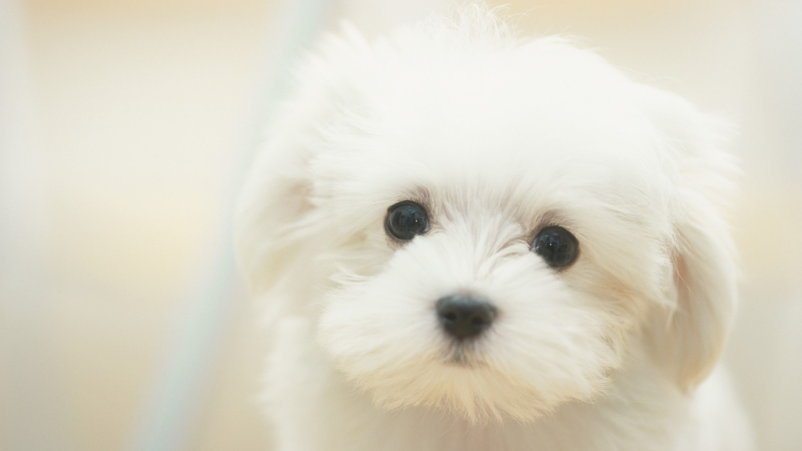 HD Cute Puppy Wallpapers | Cute Puppy Best Pictures Collection