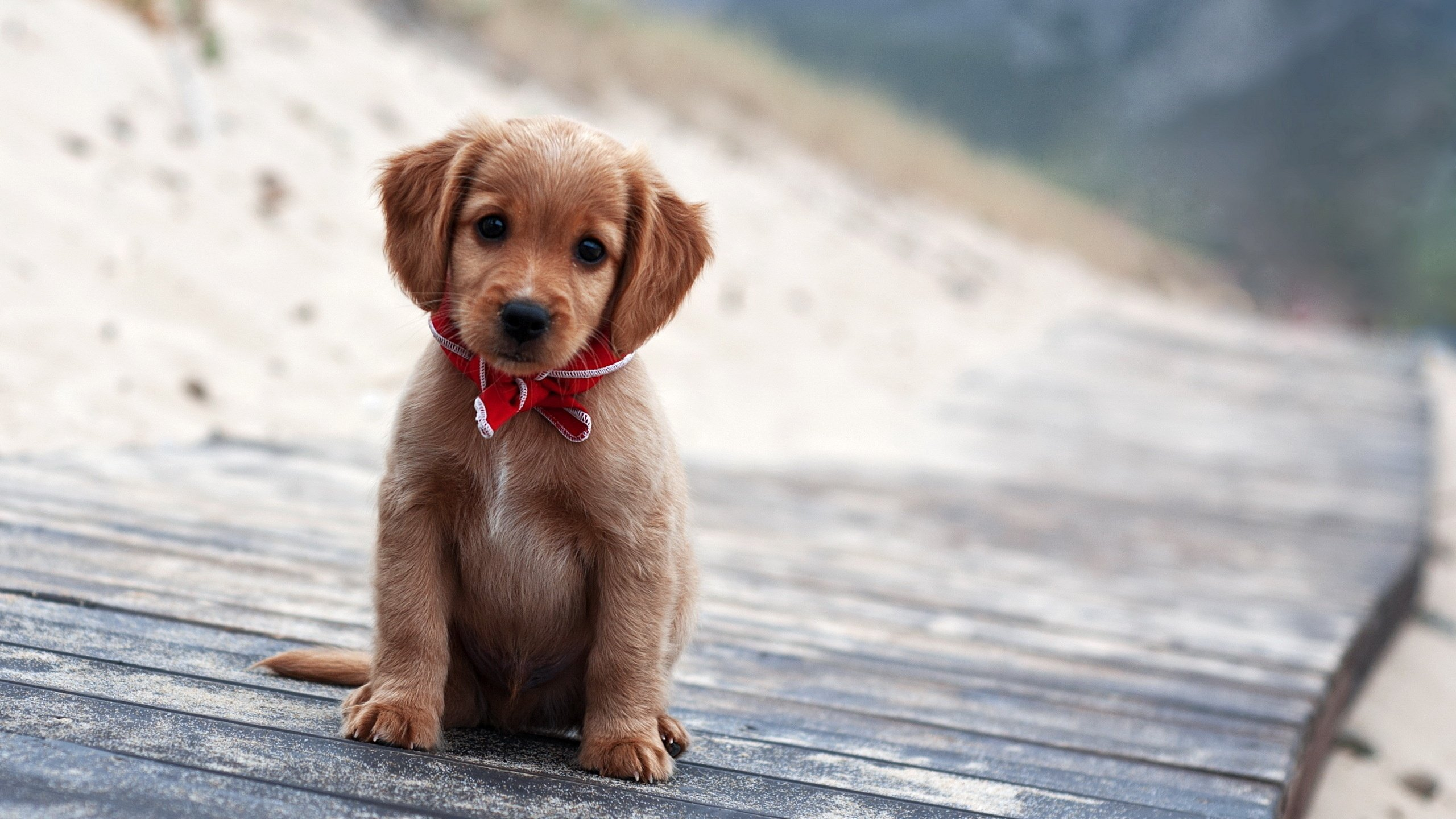 Cute Puppy Collection For Screensaver On Wallpaper Free High