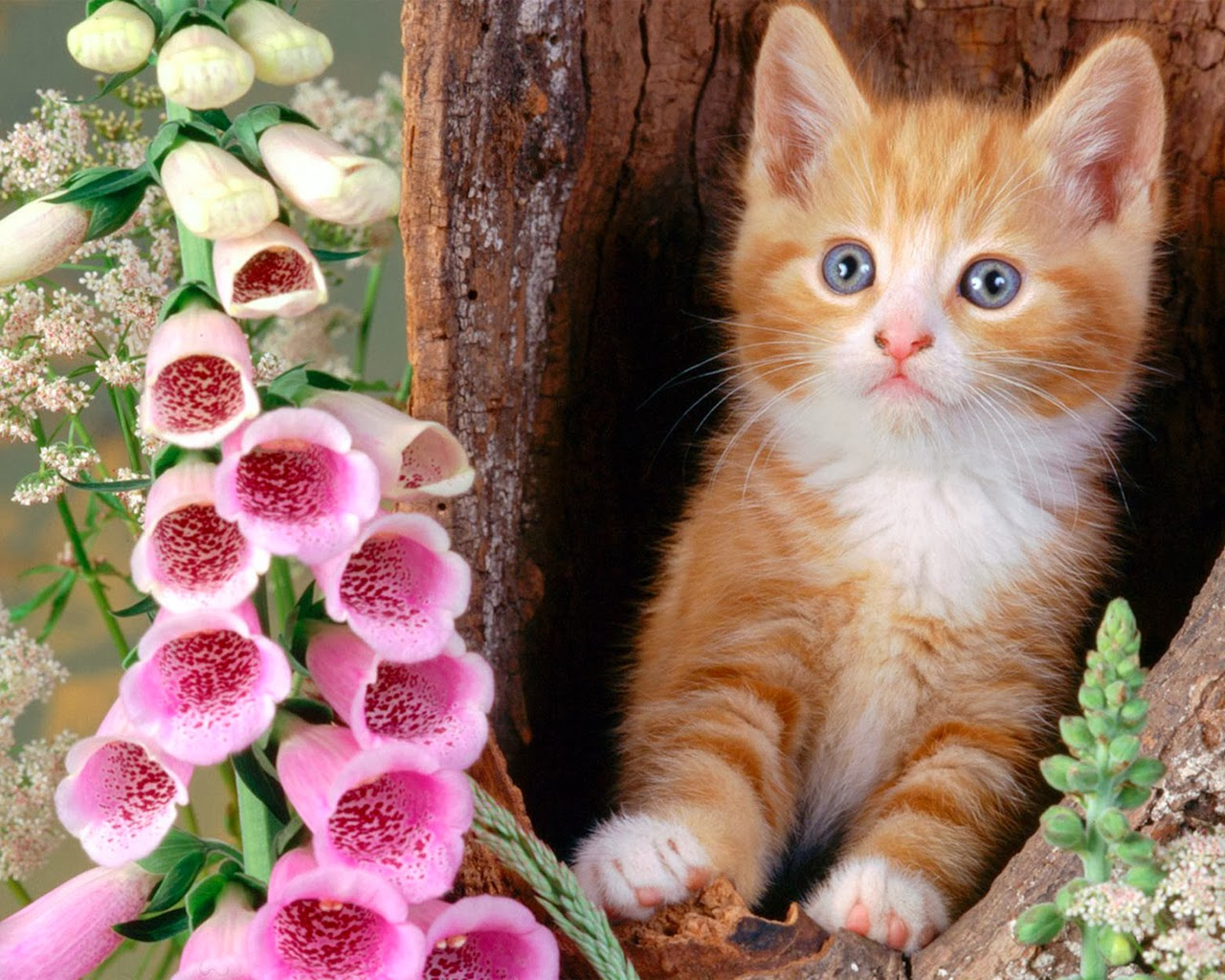 Free Download Cute Wallpapers For Desktop