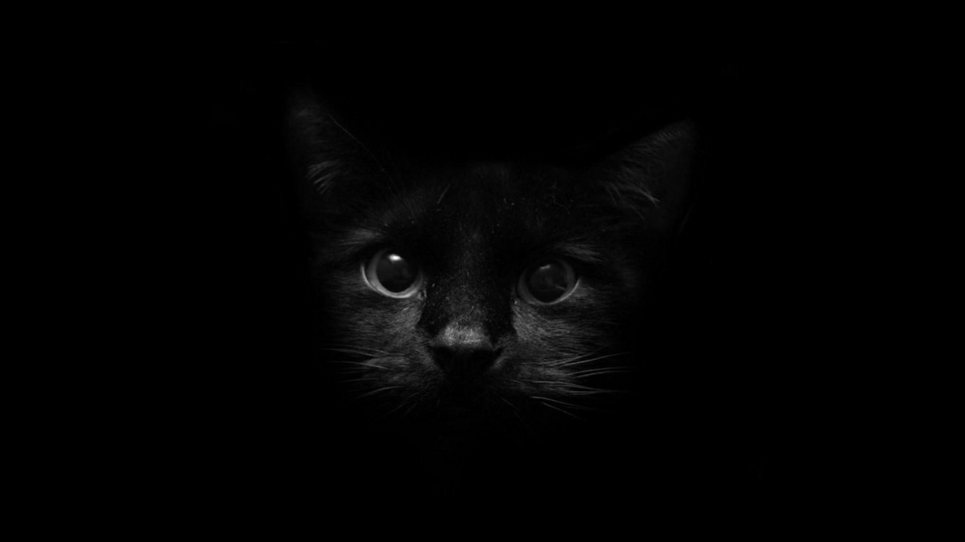 dark black hd wallpaper - sf wallpaper