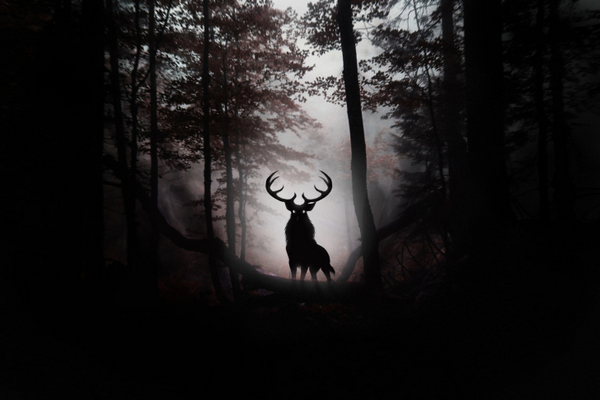 30 Dark Forest Wallpapers for Download