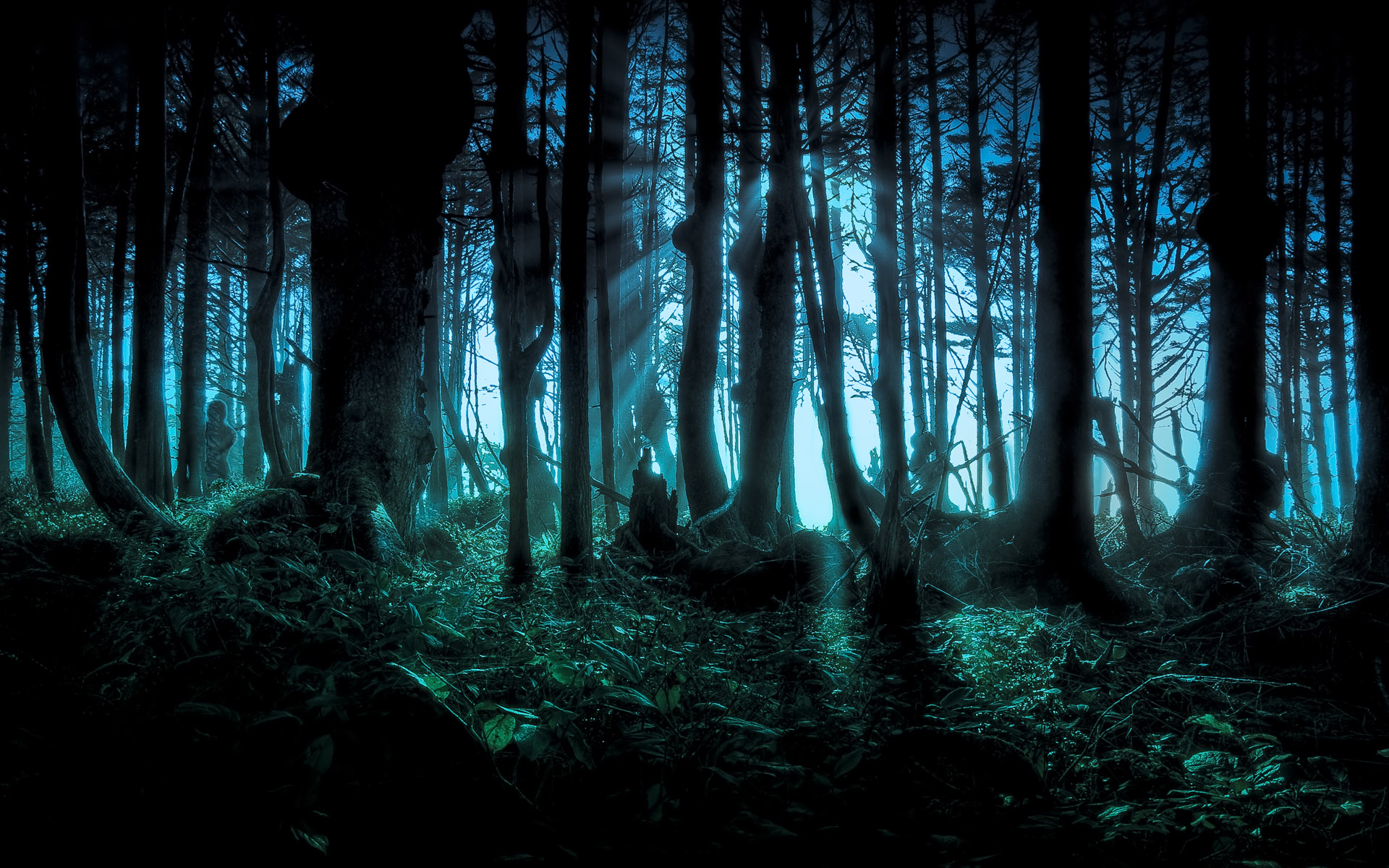 Full HD 1080p, Best HD Dark Forest Wallpapers, HBC 333 Backgrounds