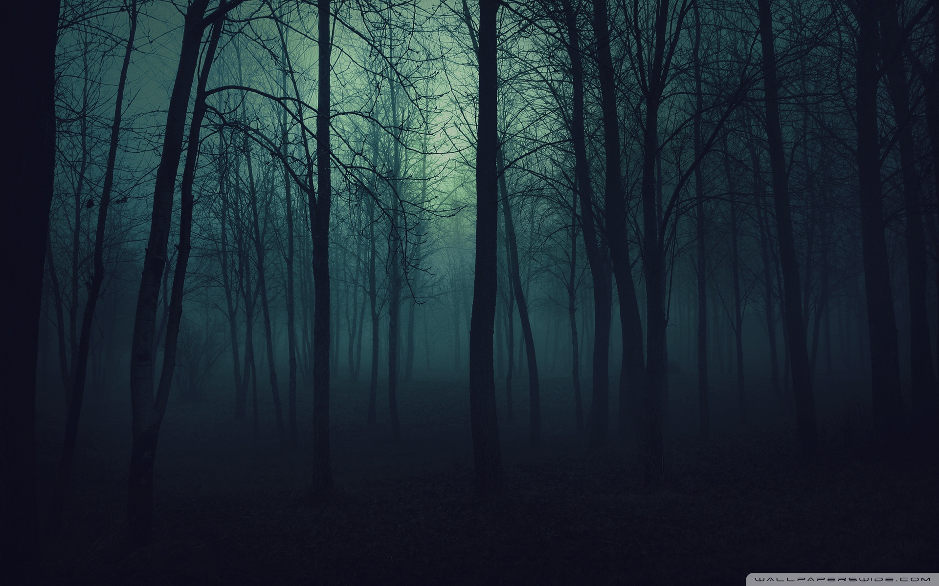 Dark Forest HD desktop wallpaper : High Definition : Fullscreen