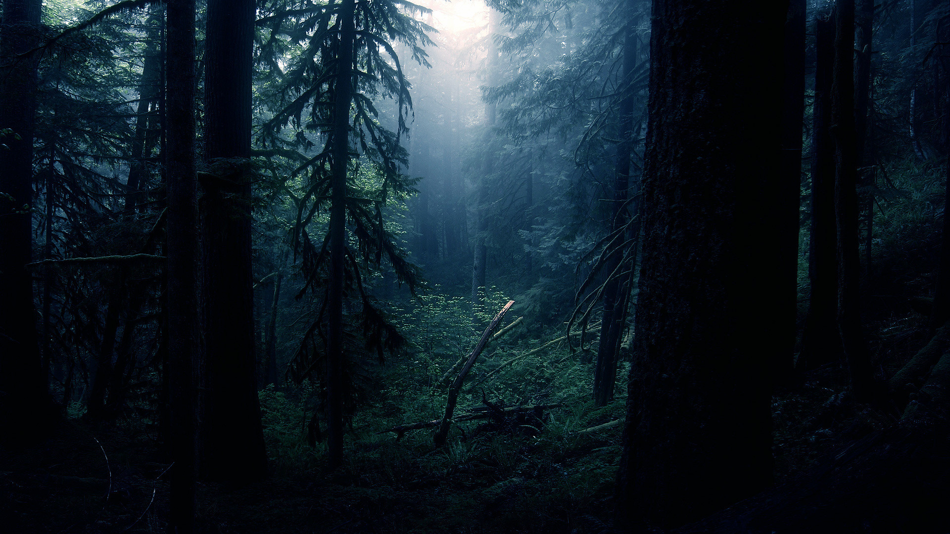 dark forest wallpaper HD – wallpapermonkey com