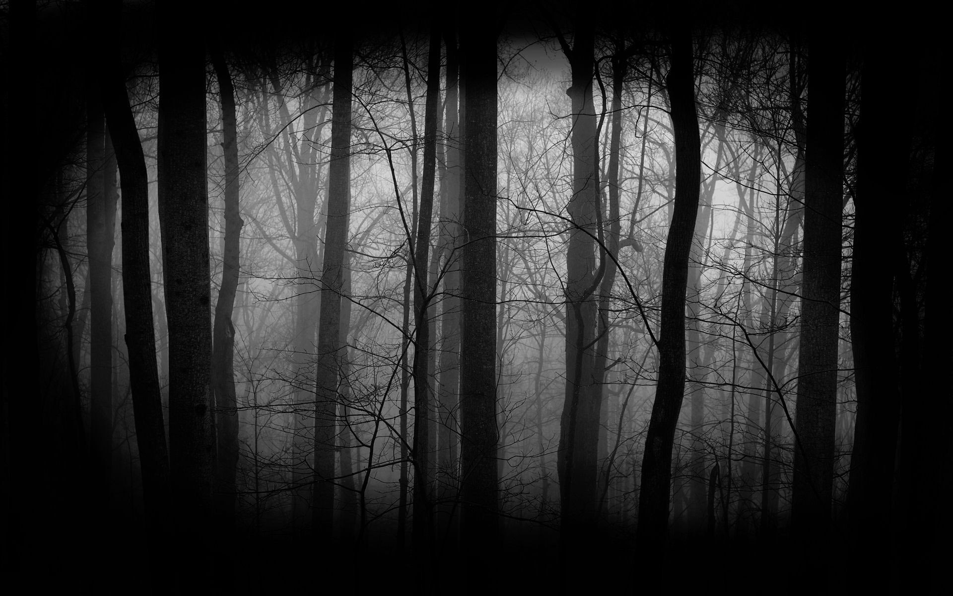 Background+Dark+Creepy+Forest | dark forest background 344 dark