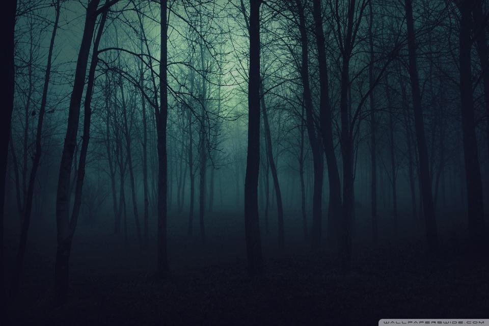 Dark Forest HD desktop wallpaper : High Definition : Fullscreen