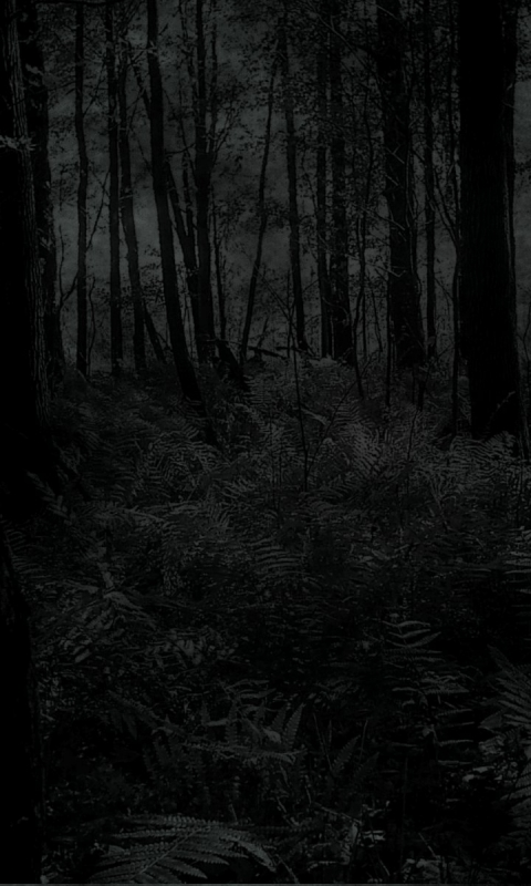 Marauder - Dark/Forest - Wallpaper ID: 234999