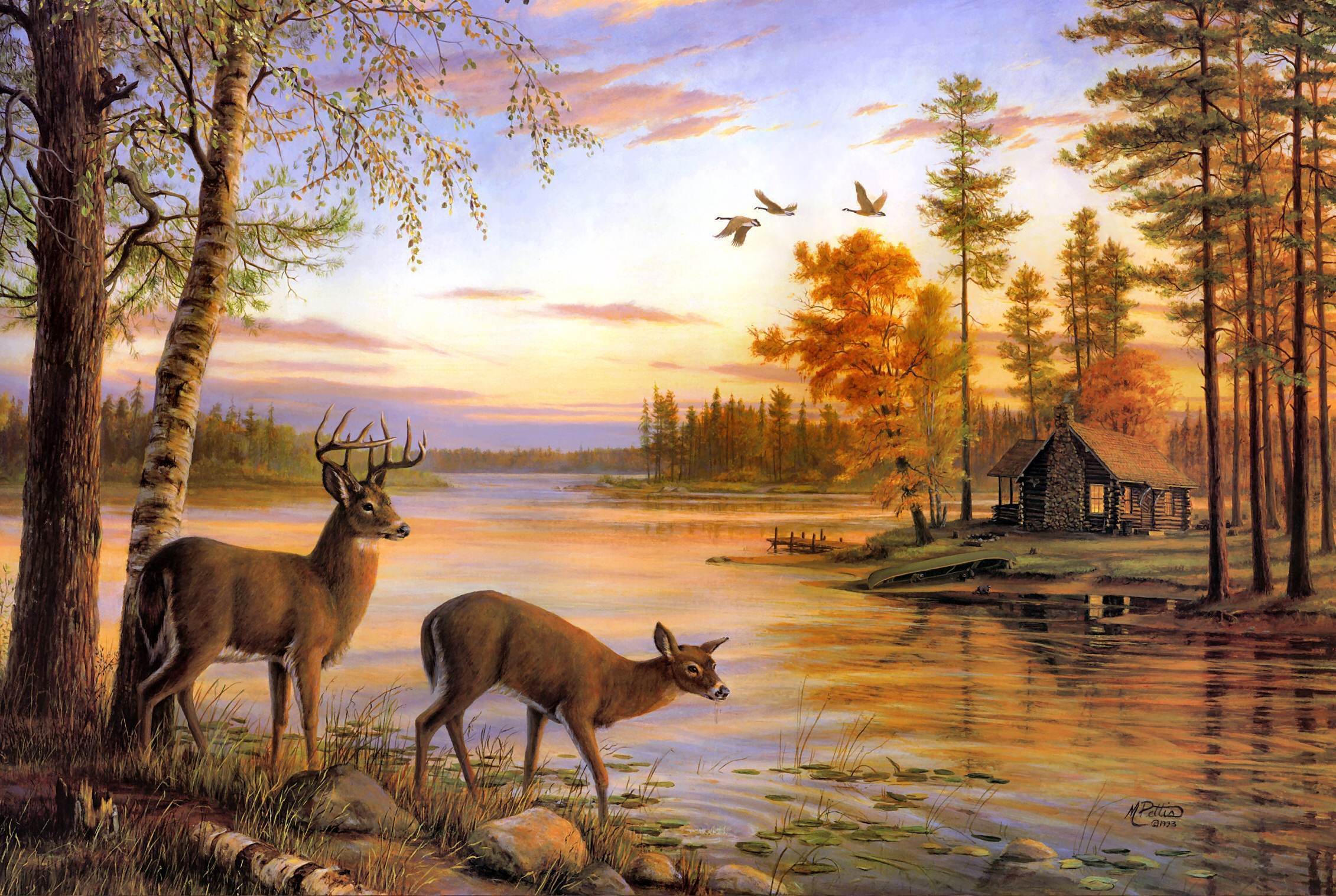 Top HD Deer Wallpapers, #NIN High Resolution