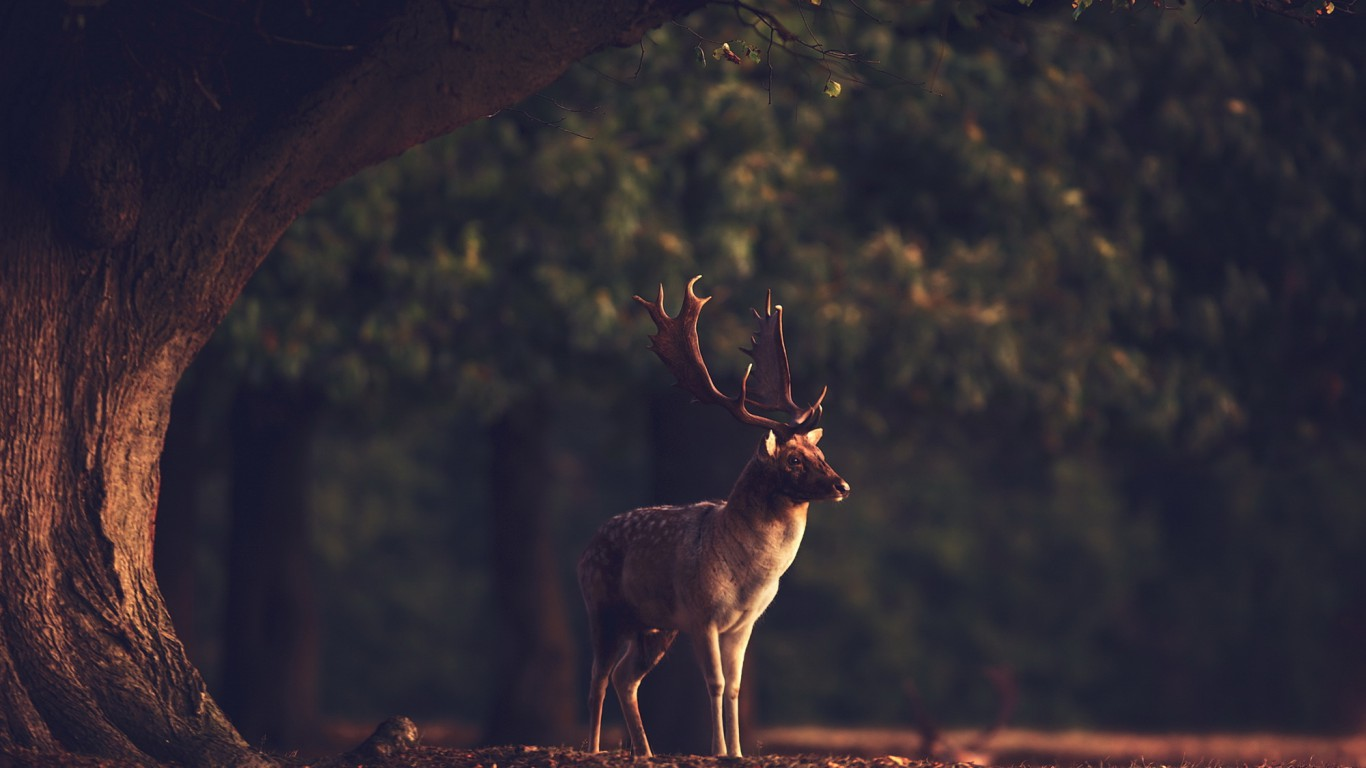 Deer Background Pictures Page 1