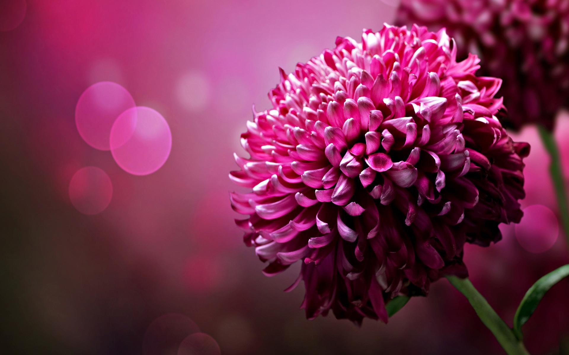 Desktop Background Flowers Wallpapers