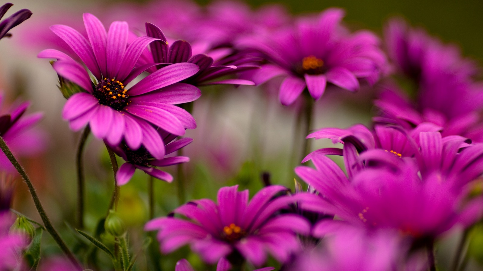 Collection of Flower Desktop Background on HDWallpapers