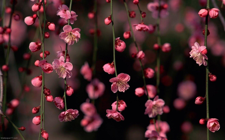 Desktop wallpapers flowers sf wallpaper floral desktop backgrounds wallpaper cave mightylinksfo