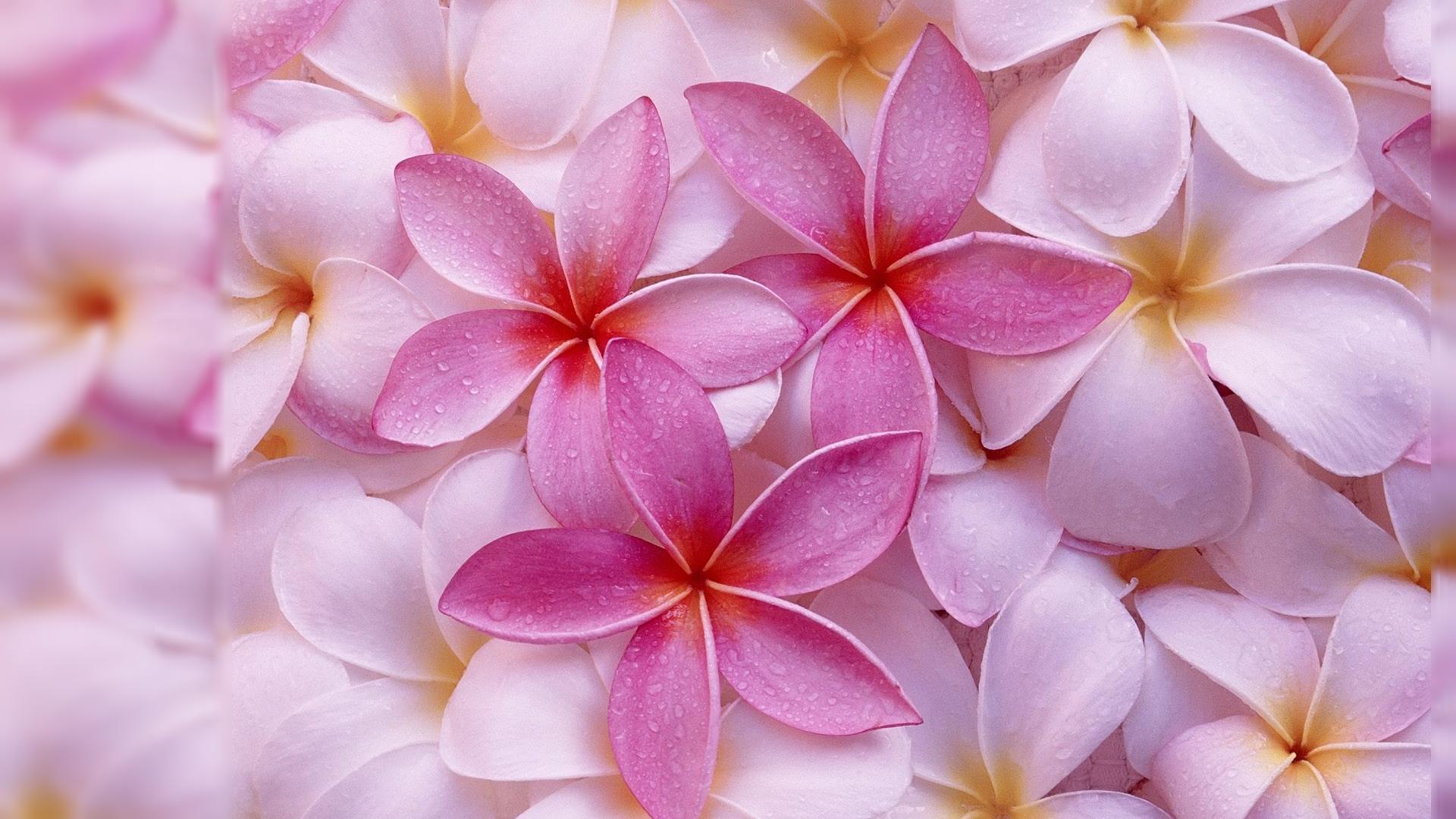 desktop flower backgrounds - sf wallpaper