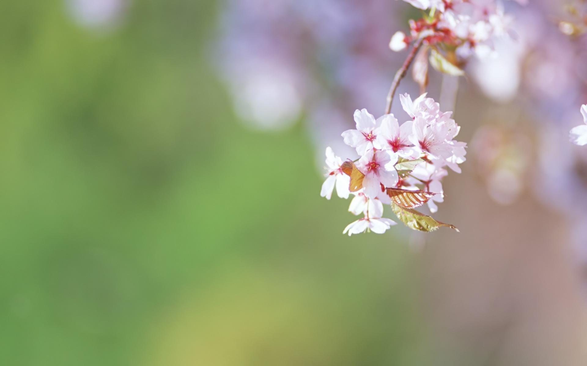 Desktop Images Spring Flowers Flowers Healthy