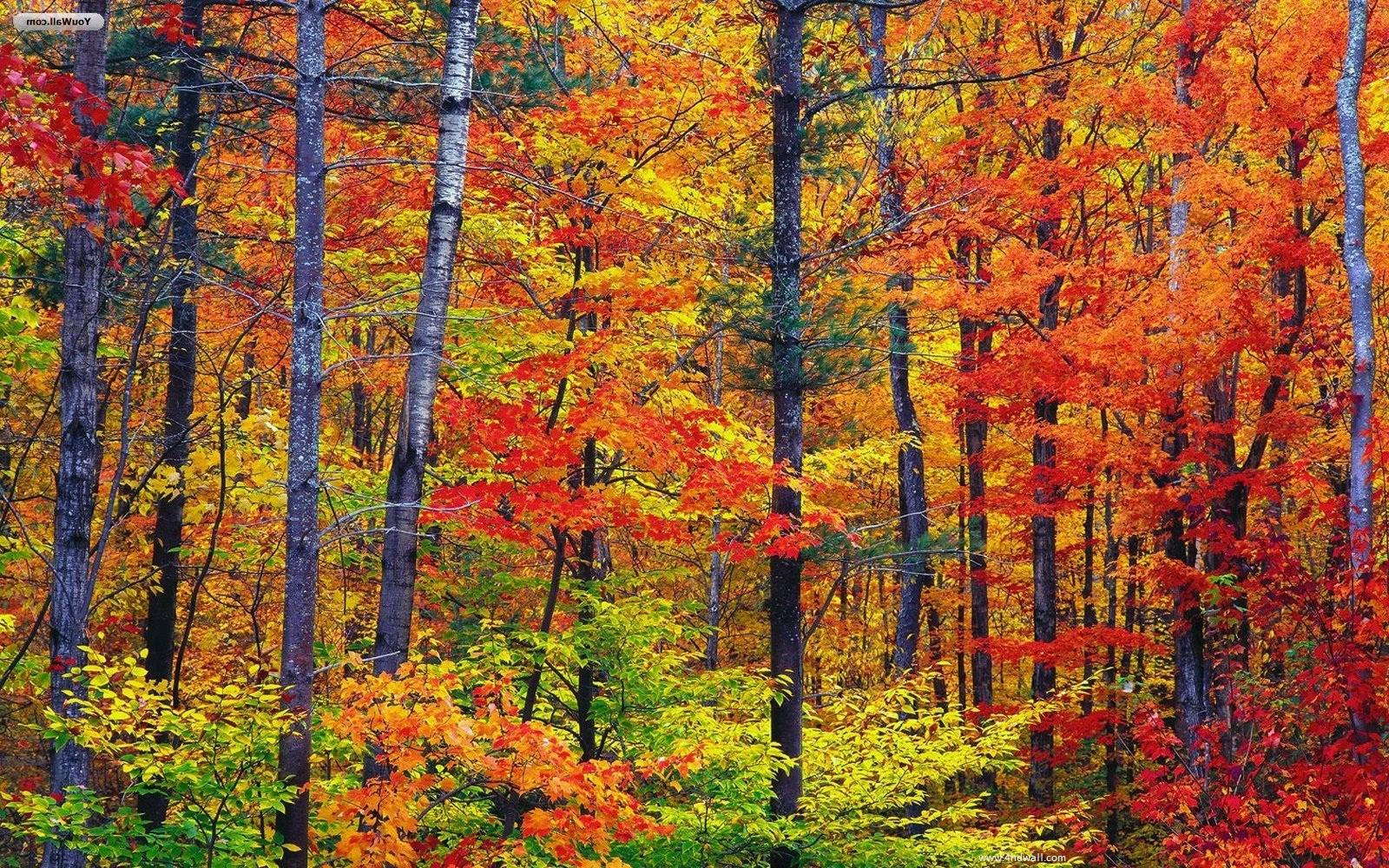 Fall Season Wallpaper for Desktop - WallpaperSafari