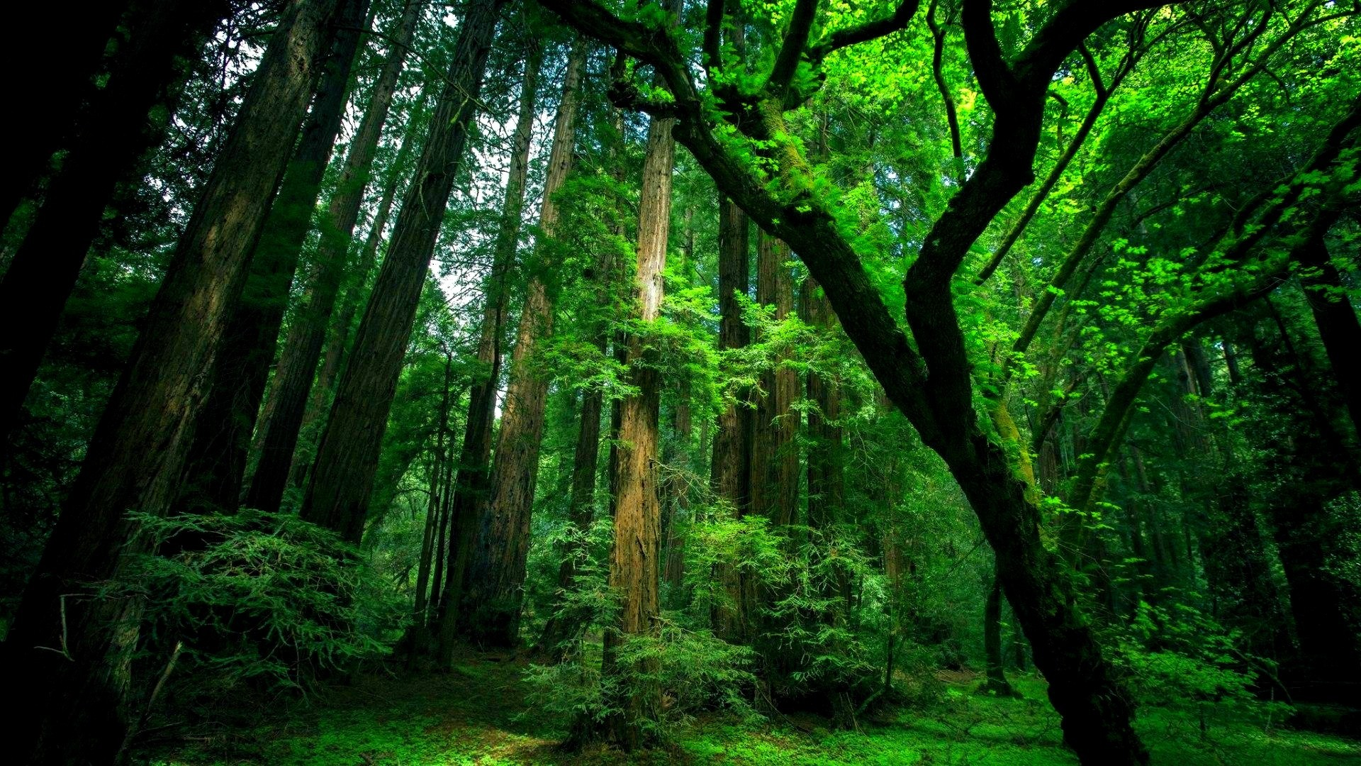 Forest Desktop Backgrounds - Wallpapers Browse