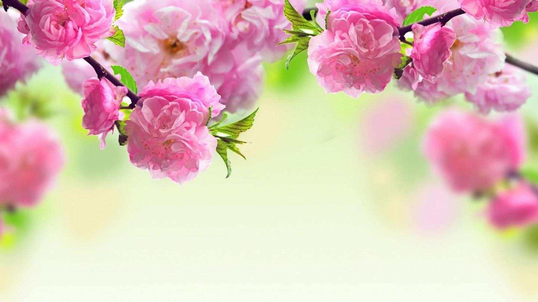 Collection of Flower Desktop Wallpaper Hd on HDWallpapers