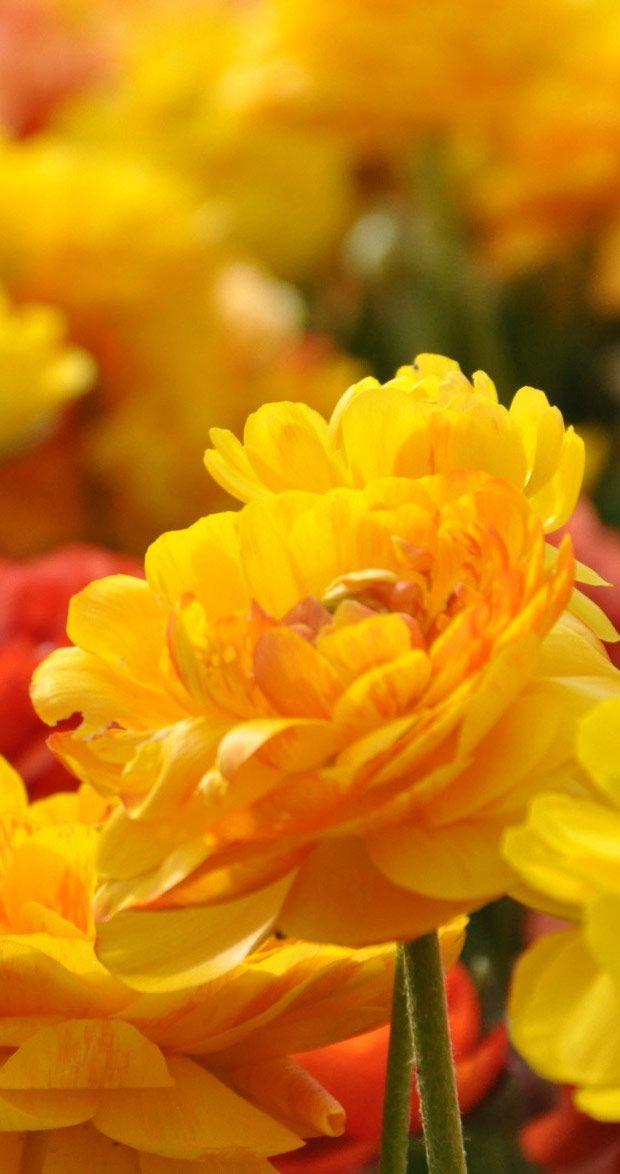 Desktop Wallpaper Hd Flowers Sf Wallpaper