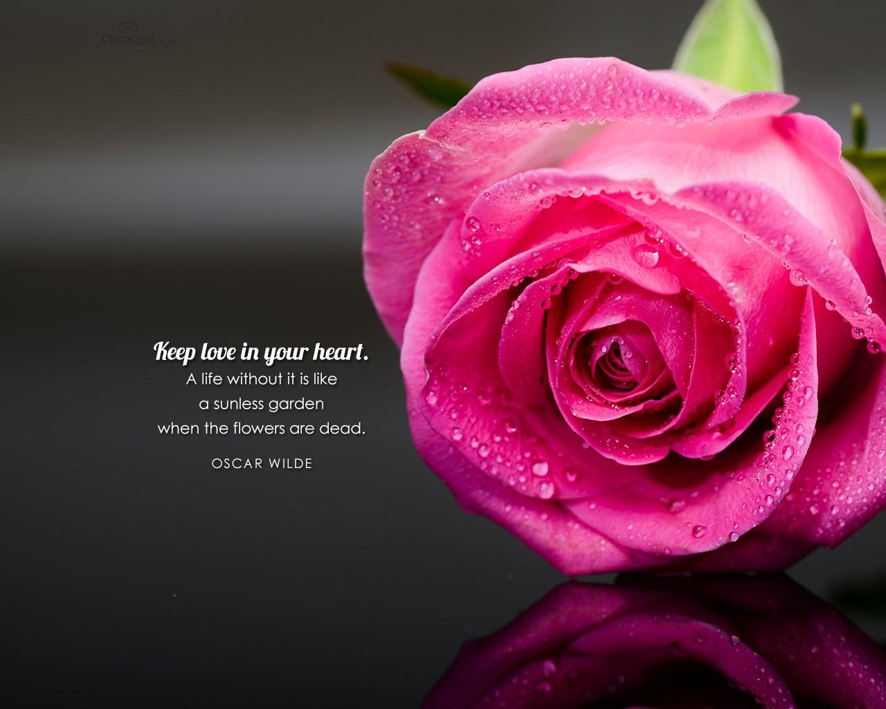 Beautiful Flowers Desktop Mobile Wallpaper