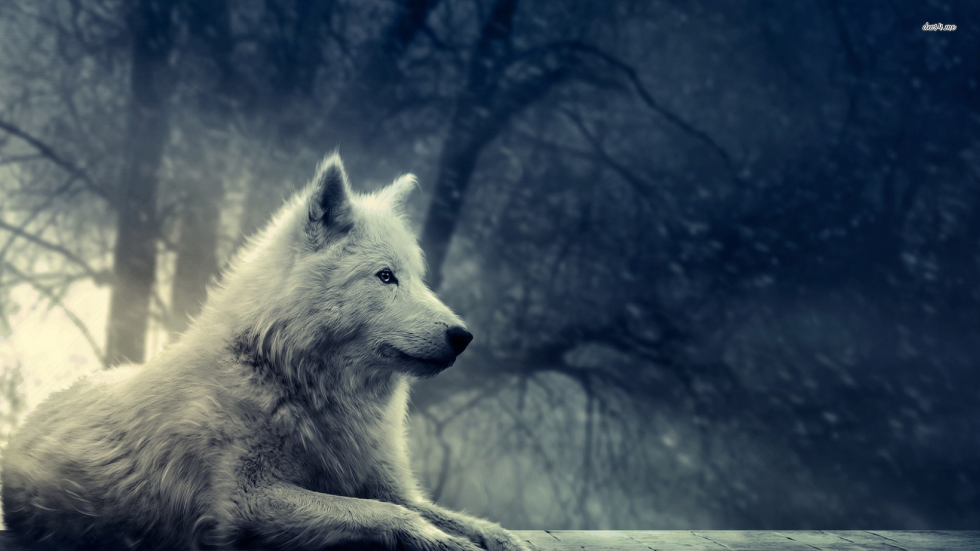 ... Desktop Wallpapers, Wonderful Wolf HD Wallpapers ... src