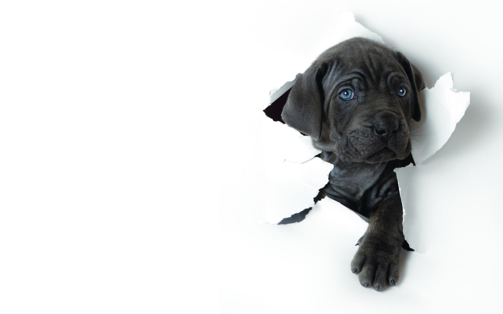 dog background | Kjpwg com