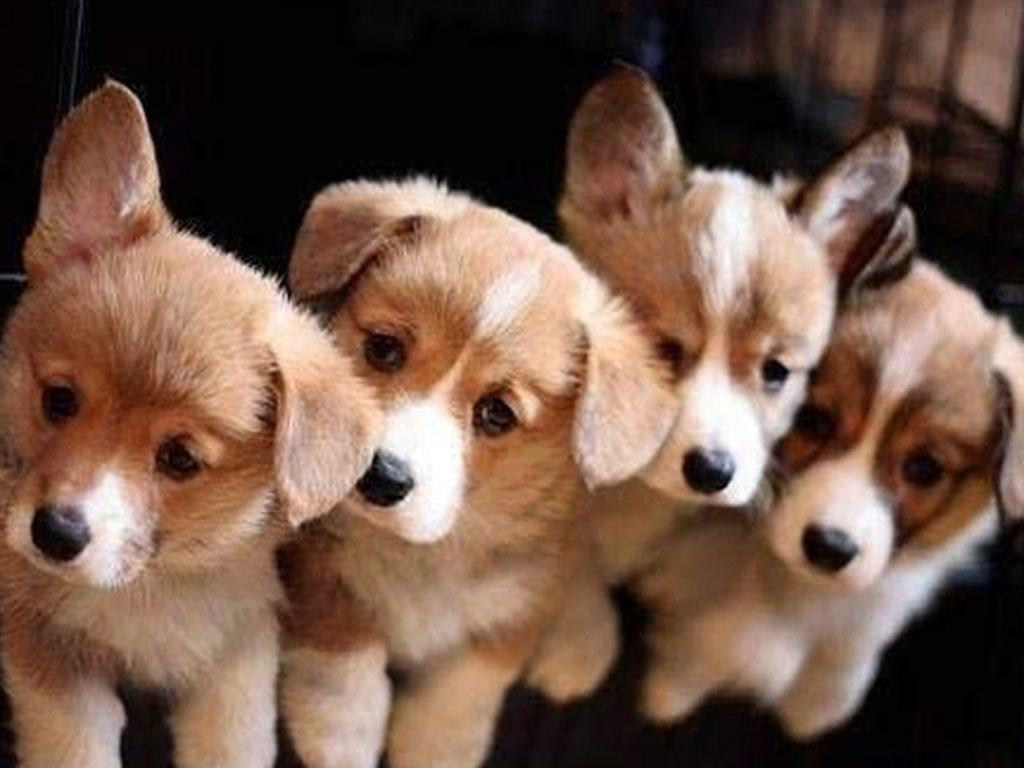 dog wallpaper puppy sf wallpaper