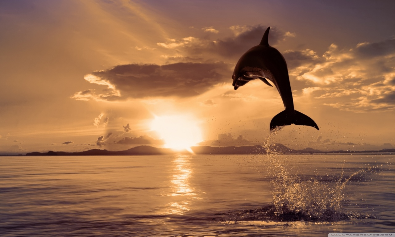 Dolphin Wallpaper Hd Sf Wallpaper