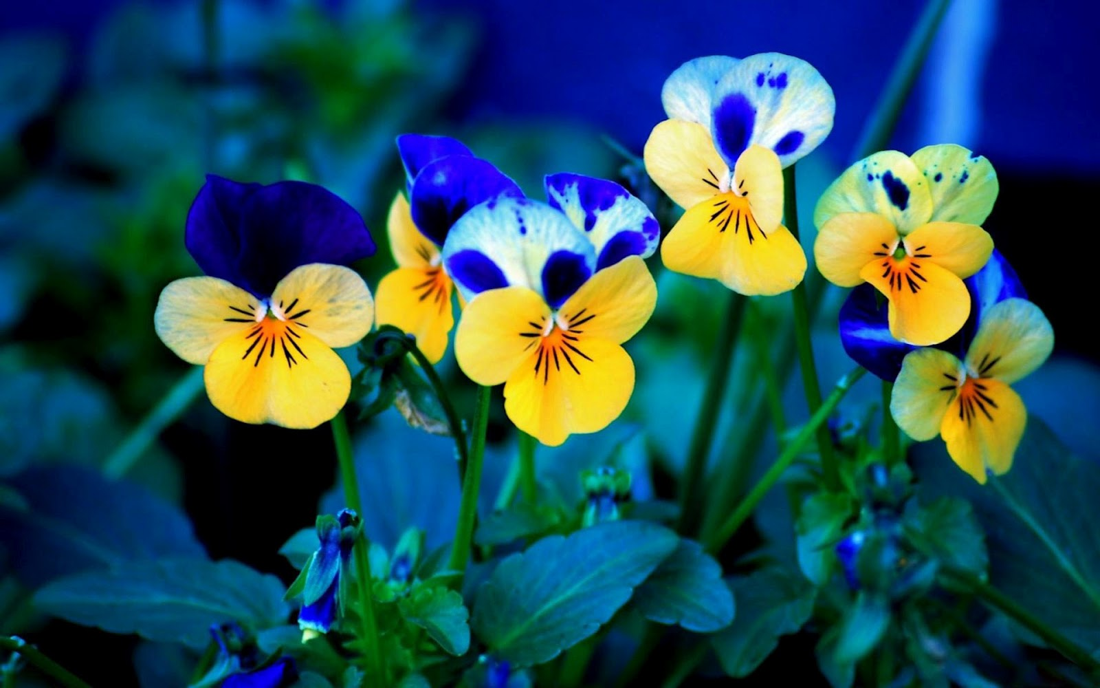 Download Beautiful Flowers Nature Hd Download For Pc Free