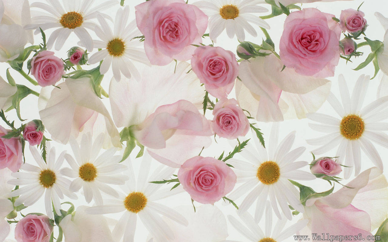 Download wallpaper flower sf wallpaper flowers for wallpapers free download group 81 izmirmasajfo Images