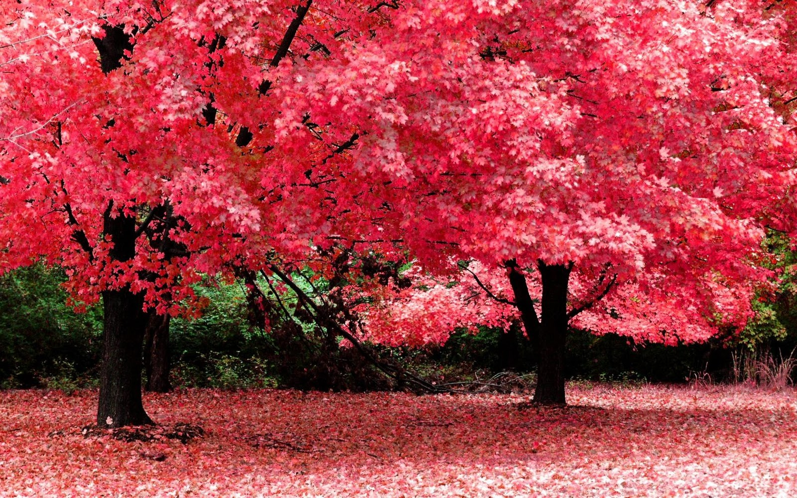 Download Autumn Fantasy High Resolution Widescreen Nature