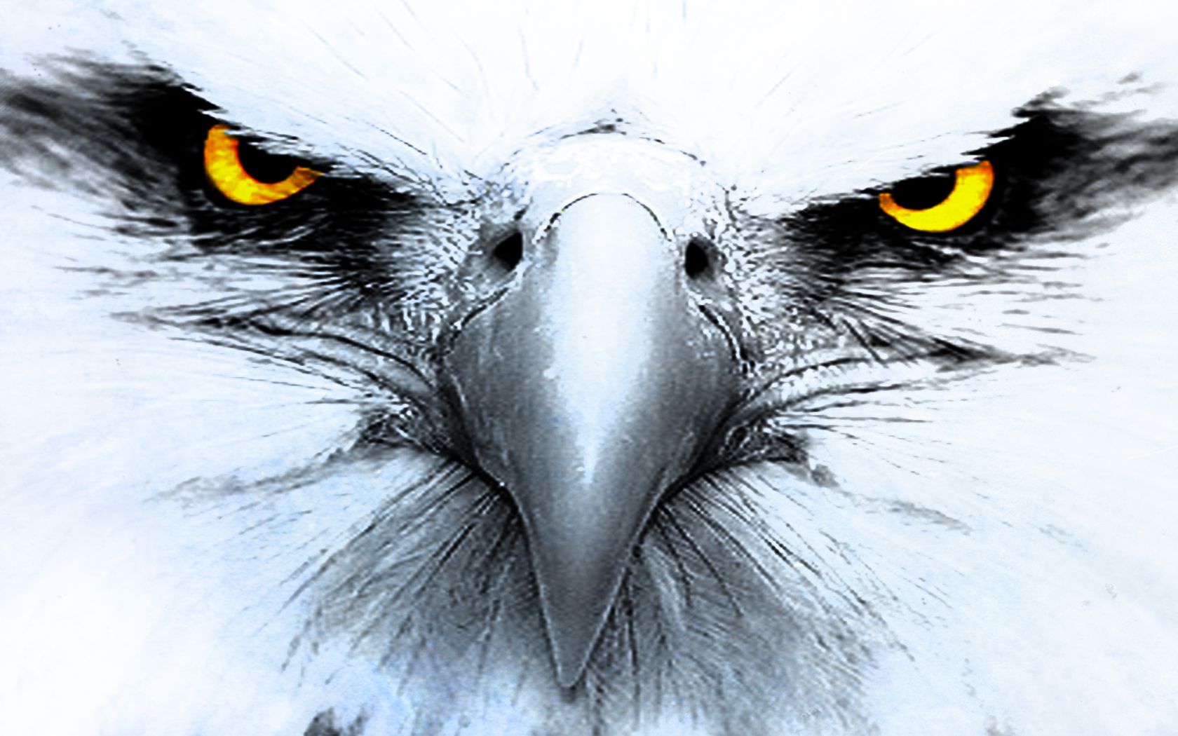 330 Eagle HD Wallpapers | Backgrounds - Wallpaper Abyss