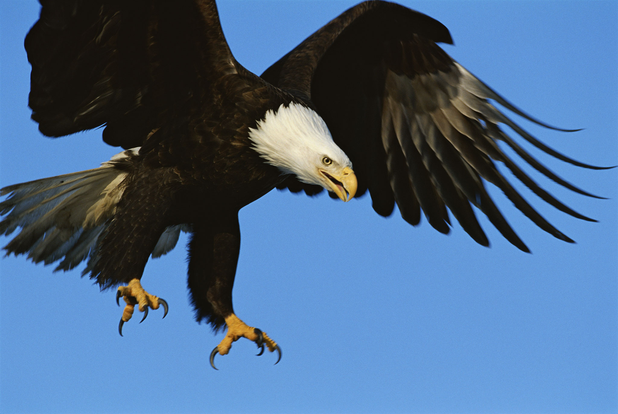 Let's Not Force Eagles to Fight Rogue Drones