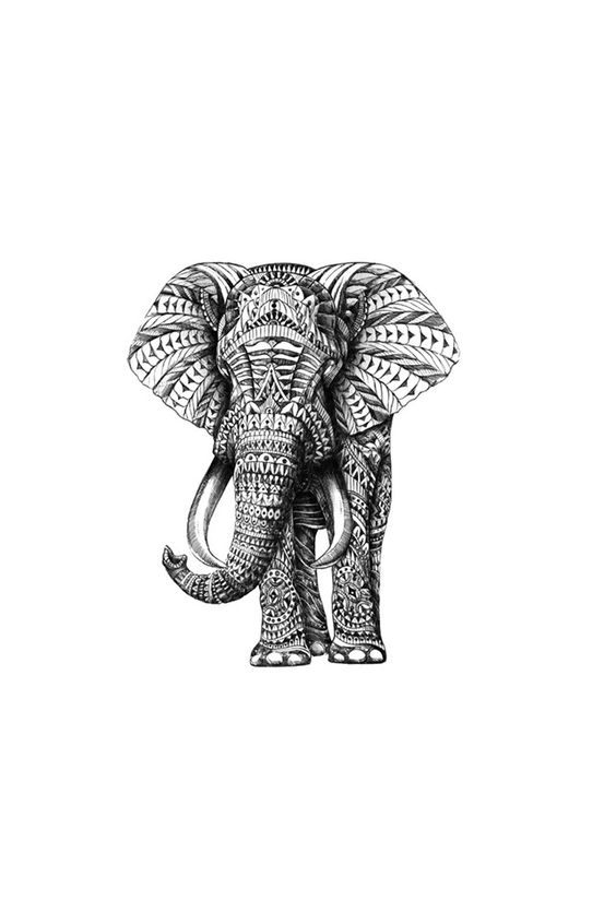 Collection of Elephant Wallpaper For Iphone on HDWallpapers