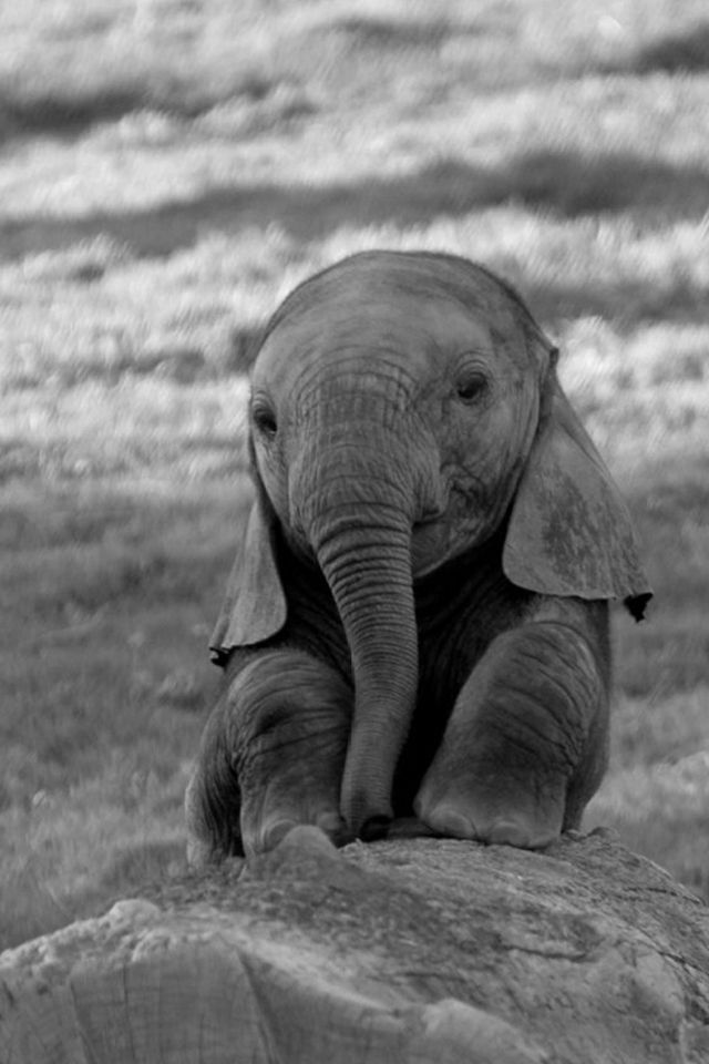 Elephant Wallpaper For Iphone Sf Wallpaper