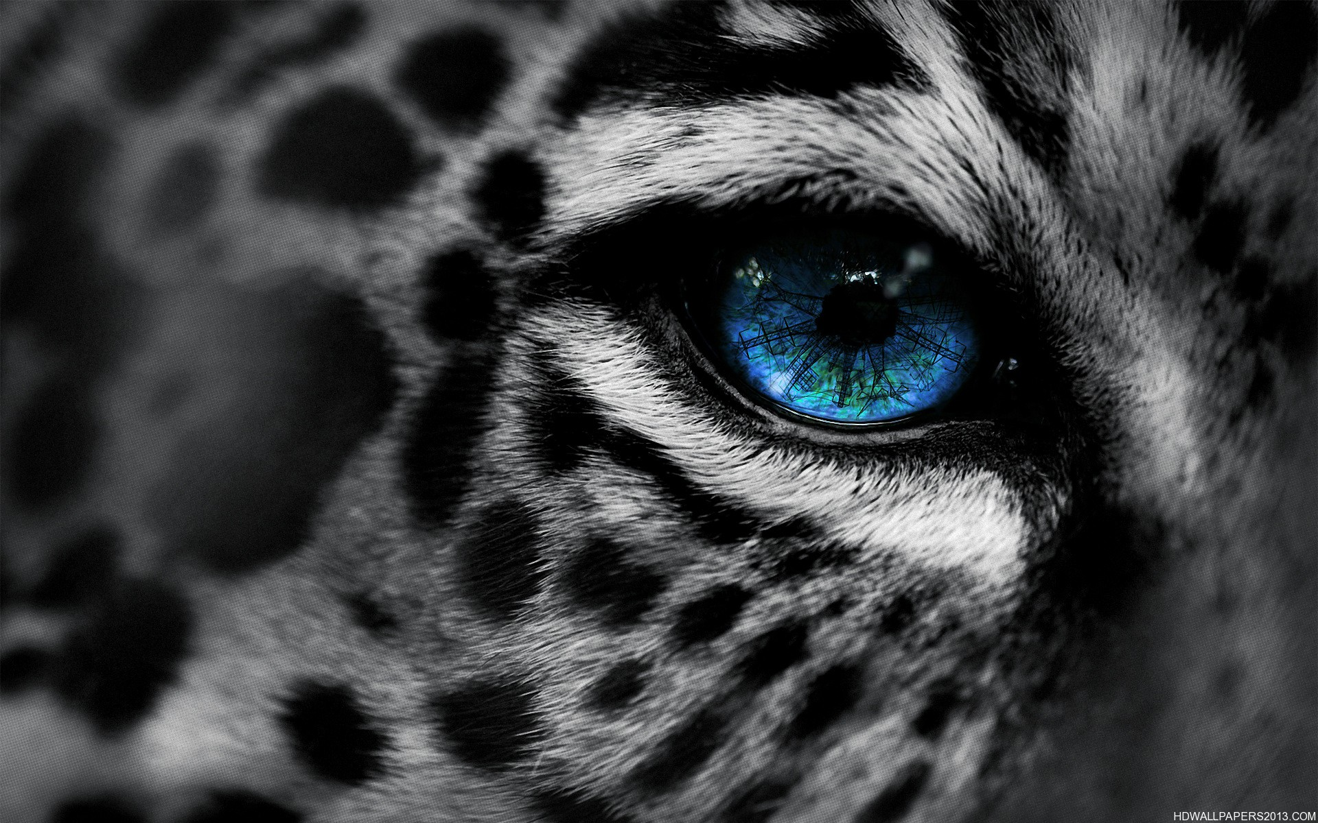 Eye-of-The-Tiger jpg (1920×1200) | HD Wallpapers | Pinterest