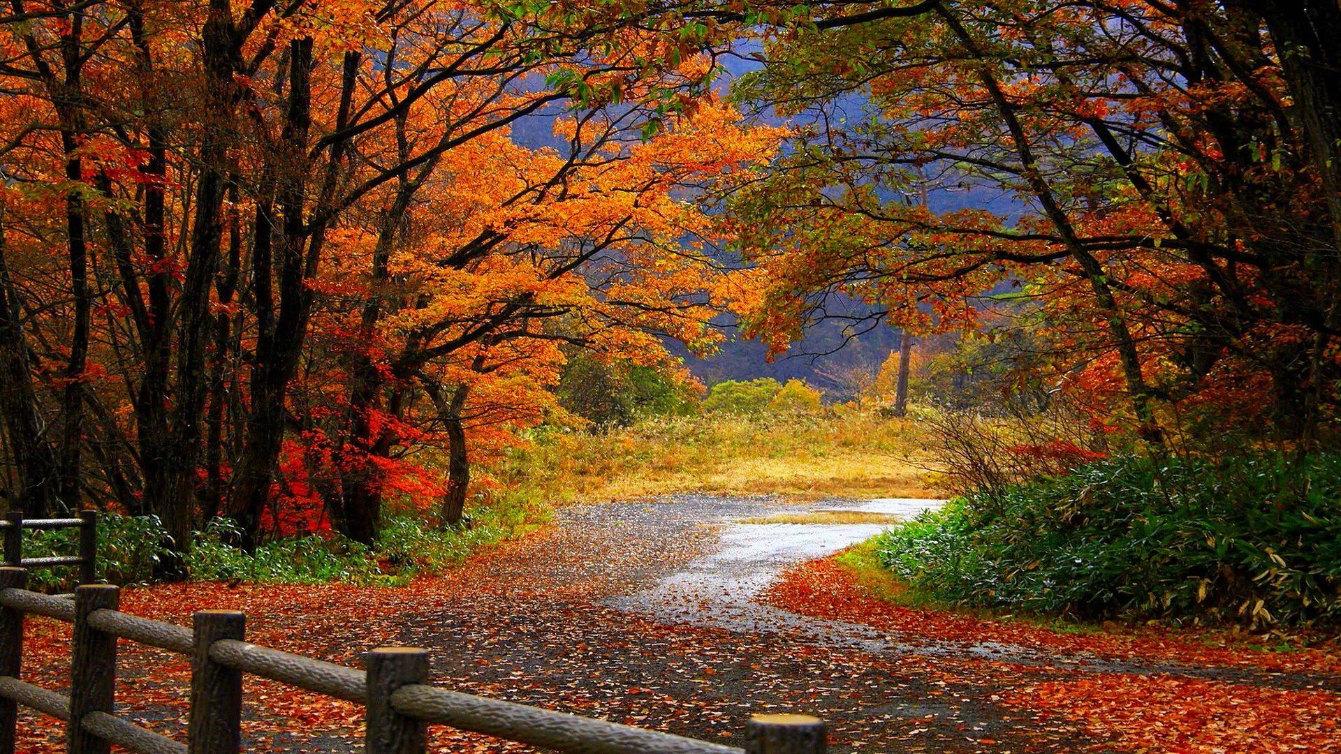 Fall Background Pics Group (52+)