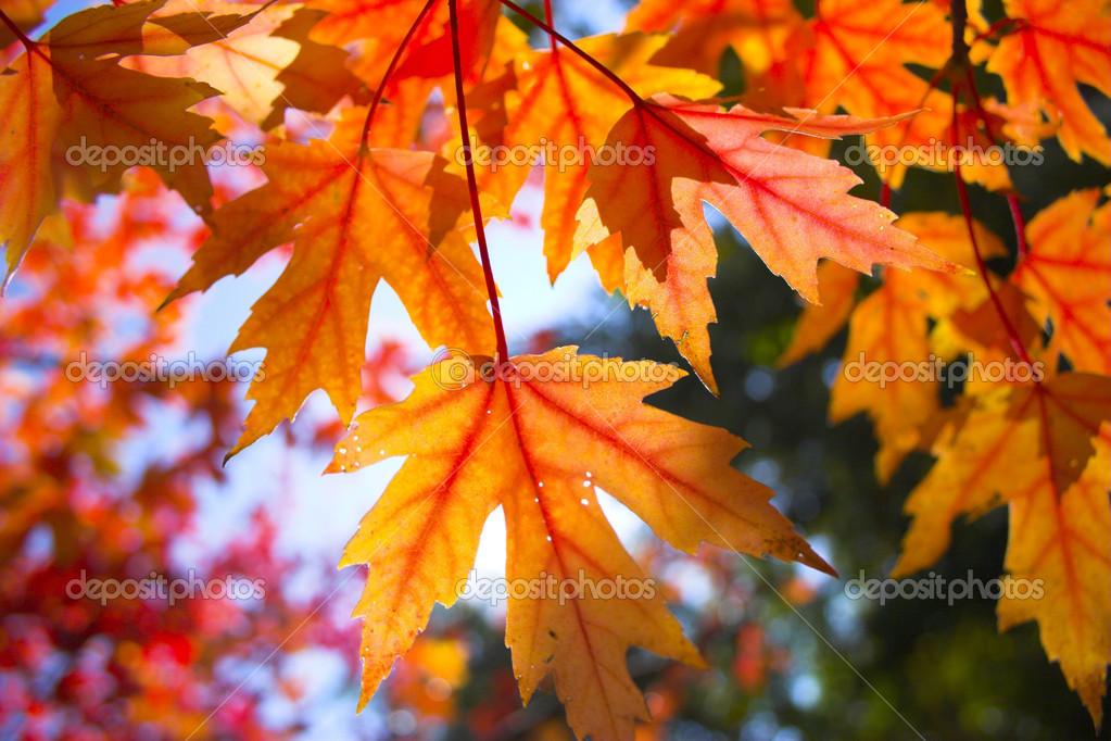 Fall background — Stock Photo © georgeburba #2365783