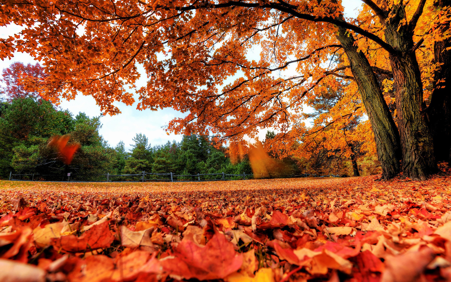 fall background images for computer sf wallpaper