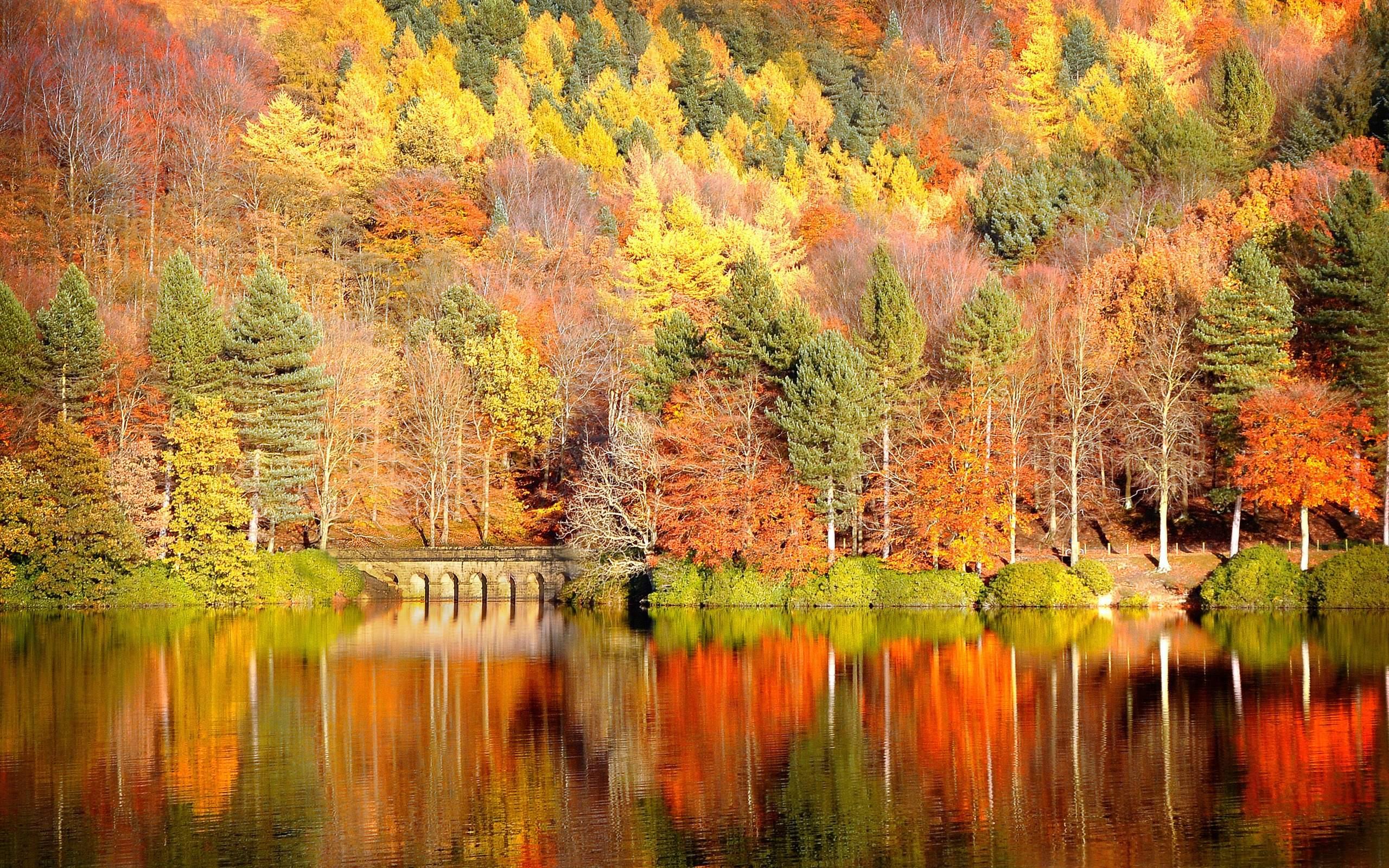 Fall Background - WallpaperSafari
