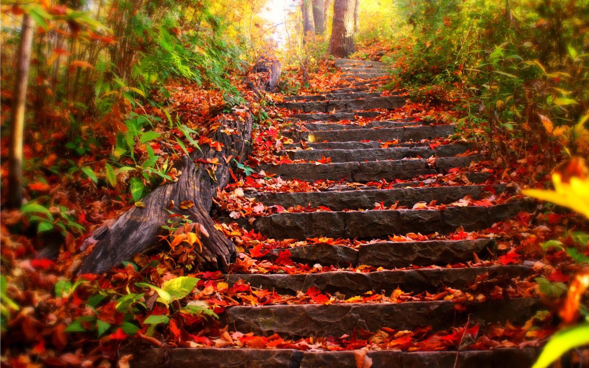 Fall Background Images - WallpaperSafari