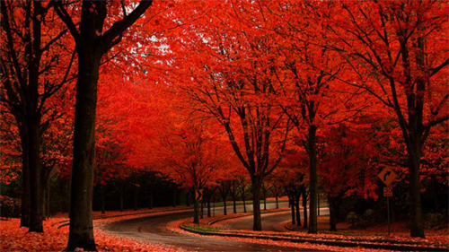 Collection of Autumn Colors Wallpaper on HDWallpapers