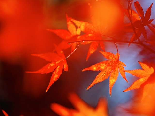 Collection of Fall Color Wallpaper on HDWallpapers