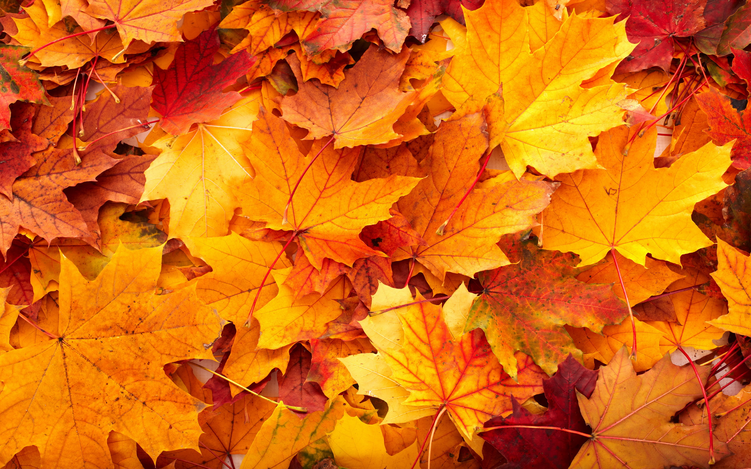 Android Wallpaper: Fall Colors